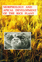 Morphology and Apical Development of the Rice plant