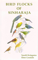 Bird Flocks of Sinharaja